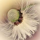Ultimate Softness... by Bob Daalder