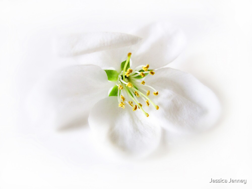 Whiter Shade of Pale by Jessica Jenney