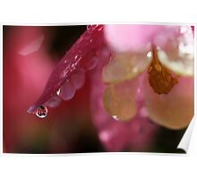 Droplets in pink Poster