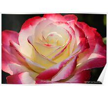 macro flora 003 Poster