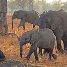 Early morning traffic by Explorations Africa Dan MacKenzie