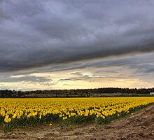 Rexville Spring by Mike  Kinney