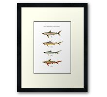 TROUT-SHARK HYBRIDS of NORTH AMERICA Framed Print