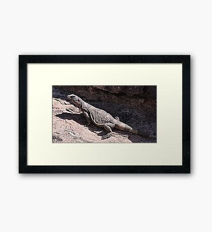 """This is really my Best Side"" - Las Vegas Chuckwalla Lizard Framed Print"