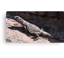 """This is really my Best Side"" - Las Vegas Chuckwalla Lizard Canvas Print"