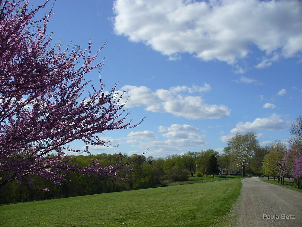 Country Garden Path in Spring by Paula Betz
