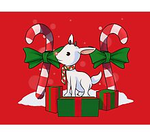 Red-nosed reindeer Photographic Print