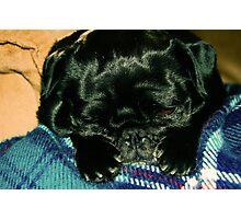 sleepy pup Photographic Print