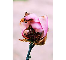 the beauty of death Photographic Print