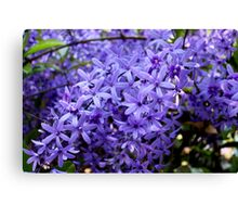 Purple splendour Canvas Print