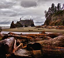 Logs and Sea Stacks by Kathy Weaver