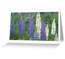Shimmering Lupin Light Nr 7 Greeting Card