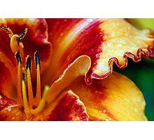 Springtime in Denver Photographic Print