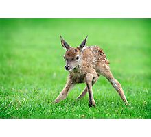 The Fawns first steps Photographic Print