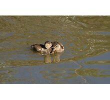 Two Mallard Duck Ducklings Photographic Print