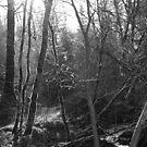 Enlightened, Enchanted Forest, Dun a Rí 2012 by ArleneMartine