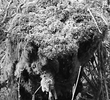 A Mossy Cave, Enchanted Forest, Dun a Rí 2012 by ArleneMartine