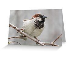 Wide Stance Greeting Card