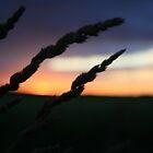 Purple Sunset by Barry Hobbs