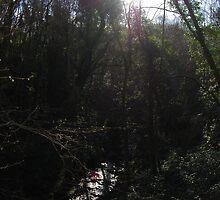 Reach for the Sky, Enchanted Forest, Dun a Rí 2012 by ArleneMartine