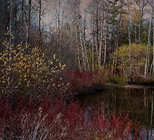 Spring Time at the Pond by Robin Webster