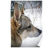 Mississippi Snow Dog Poster