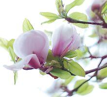 Magnolia by BDomanska