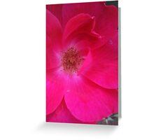 knockout rose Greeting Card