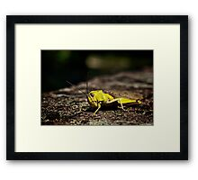 Not so mellow in yellow.... Framed Print