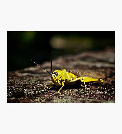 Not so mellow in yellow.... Photographic Print