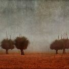Grass Trees In Fog # 2 by Eve Parry