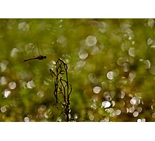 "WOoooooooohoo in mid flight  "" Sold One YAY "" Photographic Print"