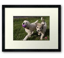 Easter Egg Chase Torro And Sheila Style Framed Print