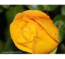 macro flora 005 Photographic Print