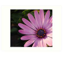 macro flora 006 Art Print