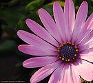macro flora 006 by Karl David Hill