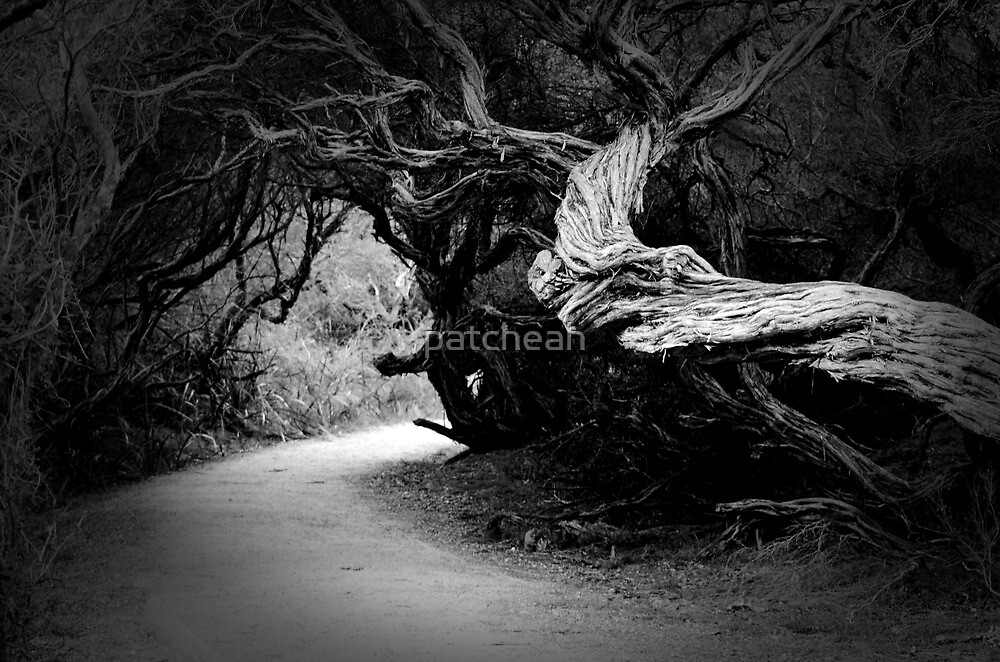 Twisted Beauty by patcheah