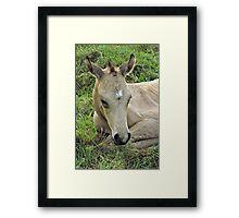 Smart Little General Framed Print