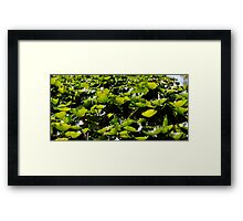 Swamp Panorama Framed Print
