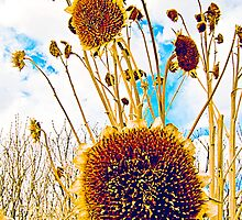 Old Sunflower Plants by Laurast