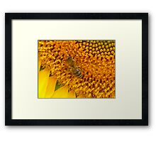 Bee on sunflower Framed Print