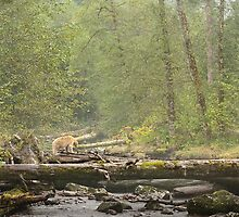 Spirit of the Great Bear Rainforest by Owed To Nature