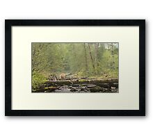 Spirit of the Great Bear Rainforest Framed Print