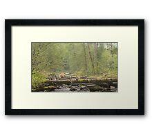 Spirit of the Great Bear Rainforest Framed Print