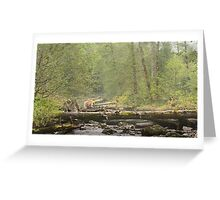 Spirit of the Great Bear Rainforest Greeting Card