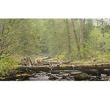Spirit of the Great Bear Rainforest Photographic Print