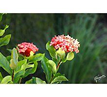 En flor Photographic Print