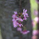 spring awakening by Kevin Koepke