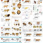 Pantherinae (big cats) chart for artists by Joumana Medlej