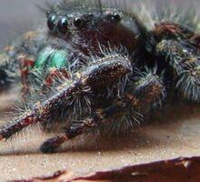 Boris the Spider or Arachnid Sticker